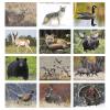 View Image 2 of 2 of Wildlife Portraits Calendar - Stapled