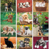 View Extra Image 1 of 1 of Puppies & Kittens Appointment Calendar - Spiral