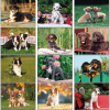 View Extra Image 1 of 1 of Puppies Calendar